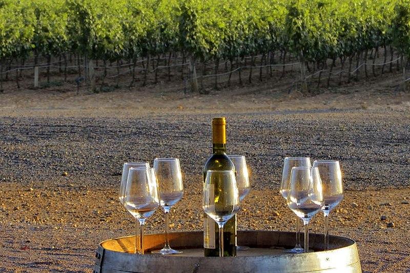 mallorca-wine-tour bodega