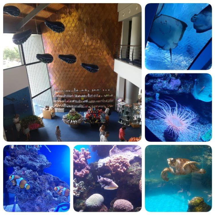 palma Aquarium palma de Mallorca